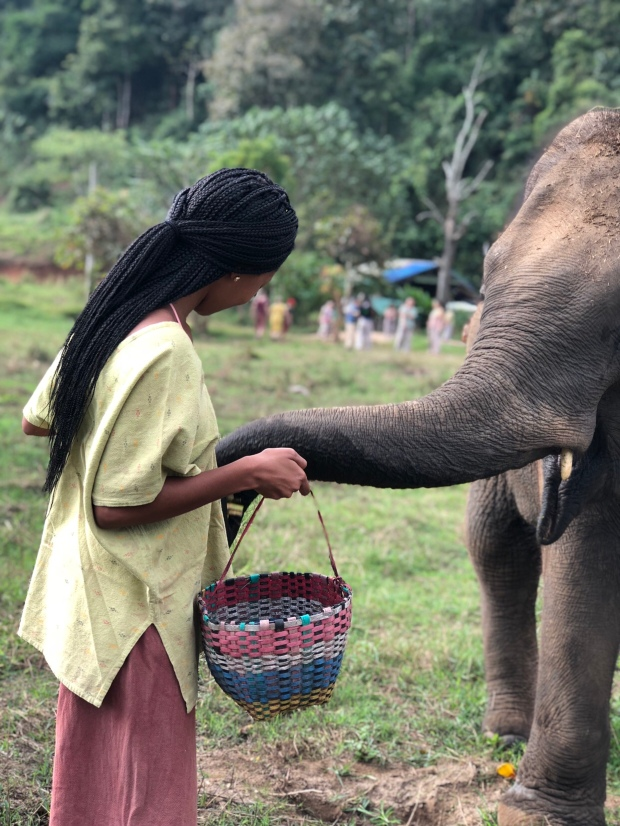 Jay Feeding elephants